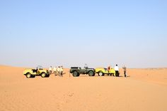 Very rare herd of elderly Rovers. Protected species. #dubai #desert #safari