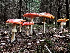 Mushroom family - null