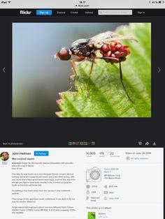 How to: settings on macro fly photography. Photo by John Hallmen.