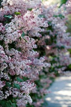 Purple Home, Pretty Flowers, Decoration, Photo Art, Cool Photos, Places To Go, How Are You Feeling, Landscape, Lilacs
