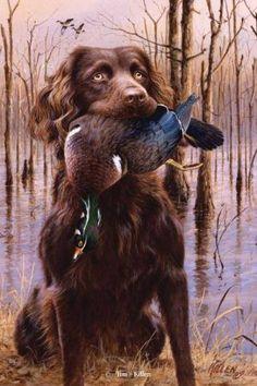 Boykin Spaniel, Spaniel Puppies, Hunting Art, Duck Hunting, Hunting Dogs, Pheasant Hunting, Wildlife Paintings, Dog Paintings, Wildlife Art