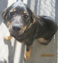 Sassy entered our shelter as a stray and is approximately 9 months old. She is currently eligible for adoption. Sassy is good with other dogs and children. She will receive a free spay with a $35 adoption fee. Sassy would love a great forever home.