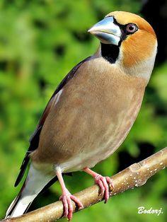 Bird On Branch, Bird Feathers, Beautiful Birds, Branches, Animals, Cutest Animals, Birds, Animales, Animaux