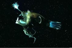 What's really swimming in the ocean deep? These unbelievable creatures, is what. Just wait until you see the blobfish.