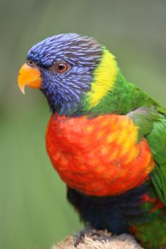 Avifauna Simply Beautiful, Parrot, Birds, Music, Nature, Events, Animals, Travel, Products