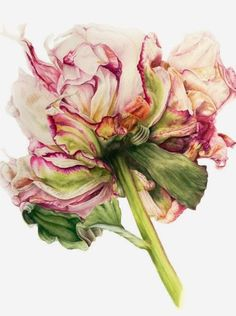 Watercolors by British Artist Marie Burke