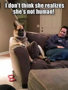 Wow we bet she dont realizes shes not human, funny dogs, cute dogs. You can create awesom funny dog memes out of them. Funny Animal Jokes, Funny Dog Memes, Really Funny Memes, Cute Funny Animals, Funny Animal Pictures, Cute Baby Animals, Funny Cute, Funny Dogs, Animal Pics