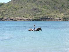 St. Lucia - Riding in the Ocean. This was perhaps the most magical of experiences on the island. A ride through woods to a deserted beach, then off with saddles and on with swimwear. The horses seem to love going into the ocean and then swimming as one, man and horse, through the clear waters of the bay.
