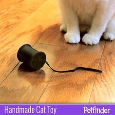 "Easy DIY Toy for your cat! You can make a rolling ""mouse"" with an empty spool and a shoelace."