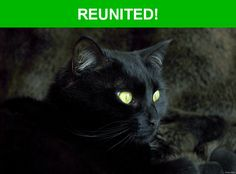 Great news! Happy to report that Mj has been reunited and is now home safe and sound! :)