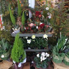 great vancouver florist We have so many #freshlymade #flowers #wreaths #cypresstrees #smflowers #northvan #northvanflorist #northvanflowers by @sm_flowers  #vancouverflorist #vancouverflorist #vancouverwedding #vancouverweddingdosanddonts