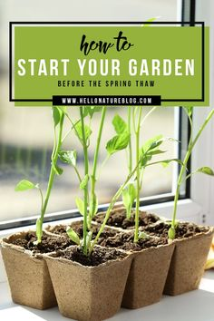 Spring is so close you can almost feel it. But mother nature has other ideas so starting your garden has to wait, right? Wrong! With these easy steps, you'll be starting seeds indoors in no time and your garden will be off to the best start possible.
