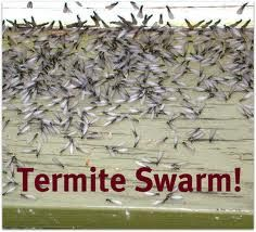 Are you concerned about termites invading your home? Whether you're fighting off an infestation or you're simply looking for a few good preventive measures, there are a variety of termite control chemicals. Signs Of Termites, Types Of Termites, Termite Control, Citrus Oil, Orange Oil, Hampton Roads