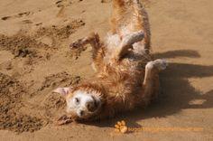 sgr1257a at the beach golden love