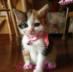 What's Your Name? #candycat #cats #cat