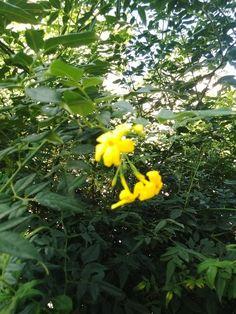 Güzel Kokulu Çiçek
