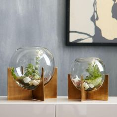 Round out your indoor garden with the modern shape of our Cross Base Terrariums. The simple globe container and antique brass-finished base provide the perfect home for succulents and small flowers.