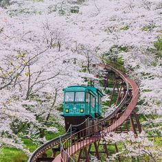 A cherry blossom-lined slope car track in Funaoka Castle Park, Sendai, Japan. Vacation Places, Places To Travel, Places To See, Aesthetic Japan, Japanese Aesthetic, Osaka, Cruises To Cuba, Cherry Blossom Japan, Sendai