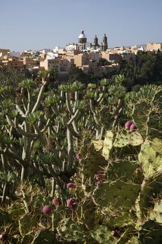 Spain, Canarias, Gran Canaria, Agüimes