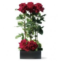 enviar rosas a colombia, enviar paralelo de rosas a colombia, enviar rosas a bogota, enviar rosas a cali, enviar rosas a bogota, enviar rosas a bucaramanga, enviar rosas a medellin