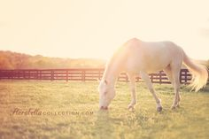love sun kissed horse by Florabellacollection.com
