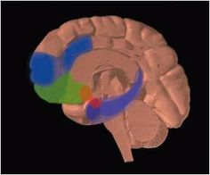 Variations in Neuronal Networks may Point Out to Traumatic Brain Injury Outcomes