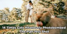 14 Times Cats Hilariously Photobombed the Purr-fect Shot - We Love Cats and Kittens Funny Cat Photos, Funny Cats, Funny Animals, Cute Animals, Kittens And Puppies, Cute Cats And Kittens, Cool Cats, Orange Tabby Cats, Bad Cats