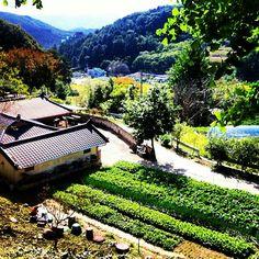 Perfect Korean Countryside. Nami Island, Korea