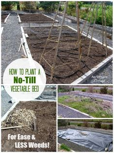Garden Landscaping Curb Appeal How to Plant a No-Till Vegetable Bed for Ease and Less Weeds! Dig Gardens, Amazing Gardens, Outdoor Gardens, Raised Gardens, Edible Garden, Easy Garden, Summer Garden, Organic Vegetables, Growing Vegetables