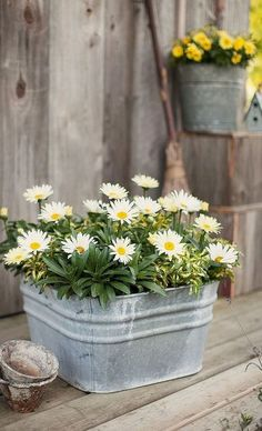 Container Gardening Here's a long blooming Shasta Daisy perennial that is right at home in an old washtub! 'Daisy May' can be enjoyed in a container all summer, and then planted in the landscape to look forward to year after year. Container Flowers, Container Plants, Container Gardening, Succulent Containers, Container Design, Pot Jardin, Design Jardin, Front Yard Landscaping, Landscaping Ideas