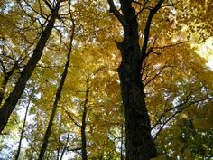 light in the canopy
