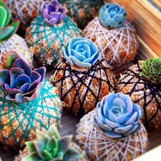 Pretty little dozen #kokedama#succulent#succulentfavour#weddingfavour