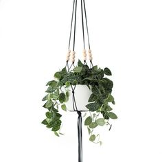 MORE COLORS Large Hanging Planter without Pot Modern by HRUSKAA
