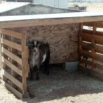 DIY Wood Pallet Goat Patio... I know, it's not a horse DIY, but it counts as barn-spiration. :)