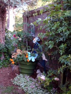 Porcelain Berry Vines  and Lamium Groundcover for shade