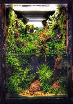 You don& need a lot of space to create a jungle inside your living room! The aquascaping world is an amazing thing! Coral Aquarium, Home Aquarium, Aquarium Design, Aquascaping, Betta Fish Tank, Aquarium Fish Tank, Amazing Aquariums, Aquarium Landscape, Reptile Terrarium
