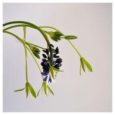 Gioco di sca...tti Plant Leaves, Garden, Plants, Garten, Gardens, Planters, Tuin, Plant, Planting