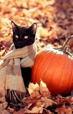 Black Cat Wearing A Scarf Sitting By A Pumpkin in the Autumn Leaves - Tiere - Katzen Crazy Cat Lady, Crazy Cats, I Love Cats, Cute Cats, Adorable Kittens, Gatos Cats, Photo Chat, Fall Halloween, Happy Halloween