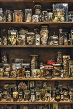 museum of curiositie