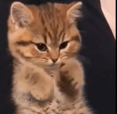Gotta start somewhere - your daily dose of funny cats - cute kittens - pet memes - pets in clothes - kitty breeds - sweet animal pictures - perfect photos for cat moms Cute Baby Cats, Cute Little Animals, Cute Kittens, Cute Funny Animals, Cats And Kittens, Funny Cats, Cute Little Kittens, Ragdoll Kittens, Tabby Cats