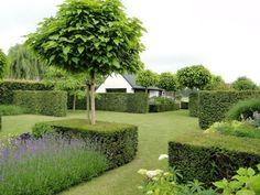 "Arbre=catalpa clipped box hedges block planted lavender, and uniform (Catalpa bignoides 'Nana' ""Indian Bean tree"") trees - lovely!"
