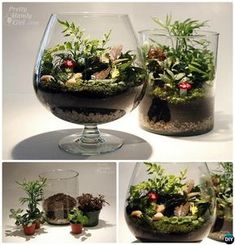 Australia's Property Prices Will Continue Falling for Foreseeable Future 10 DIY Mini Fairy Terrarium Garden Ideas Bring Life Into Your House Wine Glass DIY Mini Fairy Terrarium Garden IdeasWine Glass DIY Mini Fairy Terrarium Garden Ideas Indoor Fairy Gardens, Fairy Garden Plants, Mini Fairy Garden, Miniature Fairy Gardens, Fruit Garden, Herb Garden, Vegetable Garden, Decor Terrarium, Fairy Terrarium