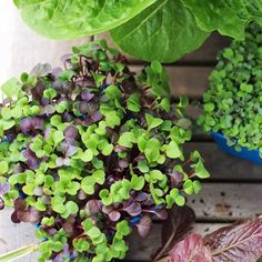 Growing Sprouts, Growing Microgreens, Plants In Bottles, Sprouting Seeds, Grow Bags, Peat Moss, Wheat Grass, Urban Farming, Potting Soil