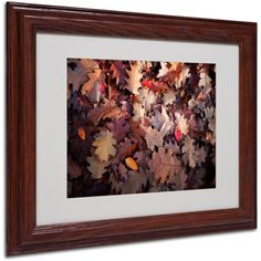 Trademark Fine Art Goofy Leaves Canvas Art by Philippe Sainte-Laudy, Wood Frame, Size: 11 x 14, Multicolor
