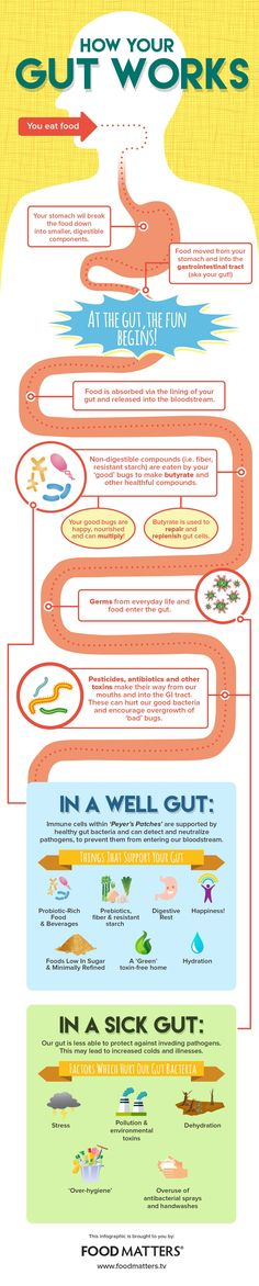 Everything You Need To Know About Gut Health (Infographic)