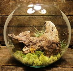 MADE TO ORDER Miniature Landscape Terrarium with tiny Sasquatch, Driftwood, and Air Plant  - Unique Beautiful Interesting Creature Bigfoot
