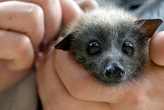 60 Adorable Bats That'll Make Your Day- I WANT ONE