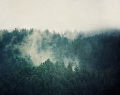 Landscape Photography, Evergreen Trees in Fog, Teal Wall Art, Spring Photograph, Forest, Rain, Mist, Mysterious, Blue Green - Savage Beauty. $30.00, via Etsy.