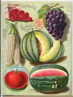 Such a luscious Victorian illustration of several wonderful fruits & vegetables. http://www.fancylinda.com/2010_08_01_archive.html