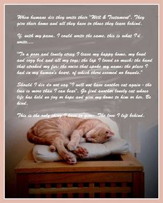Art Print Cat's Last Will and Testament - Cat AccessoriesArt Print Cats Last Will and Testament. I adapted this from something else which touched my heart when my old feline friend passed away. As a cat lover it may touch yours too. I will be listing Crazy Cat Lady, Crazy Cats, Cute Cats, Funny Cats, Pet Loss Grief, Last Will And Testament, Amor Animal, Animal Poems, Pet Remembrance